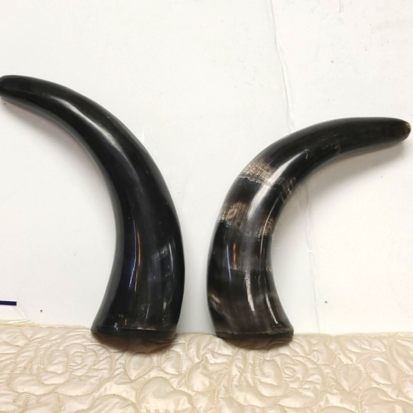 "2 Polished Water Buffalo Horns 10"""